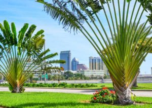 South Tampa neighborhood, Tampa Bay, Florida